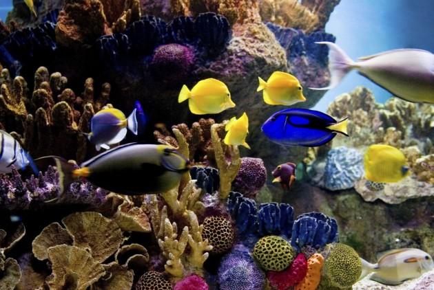 A grande barreira de coral australiana a f bula for Peces de colores para acuarios