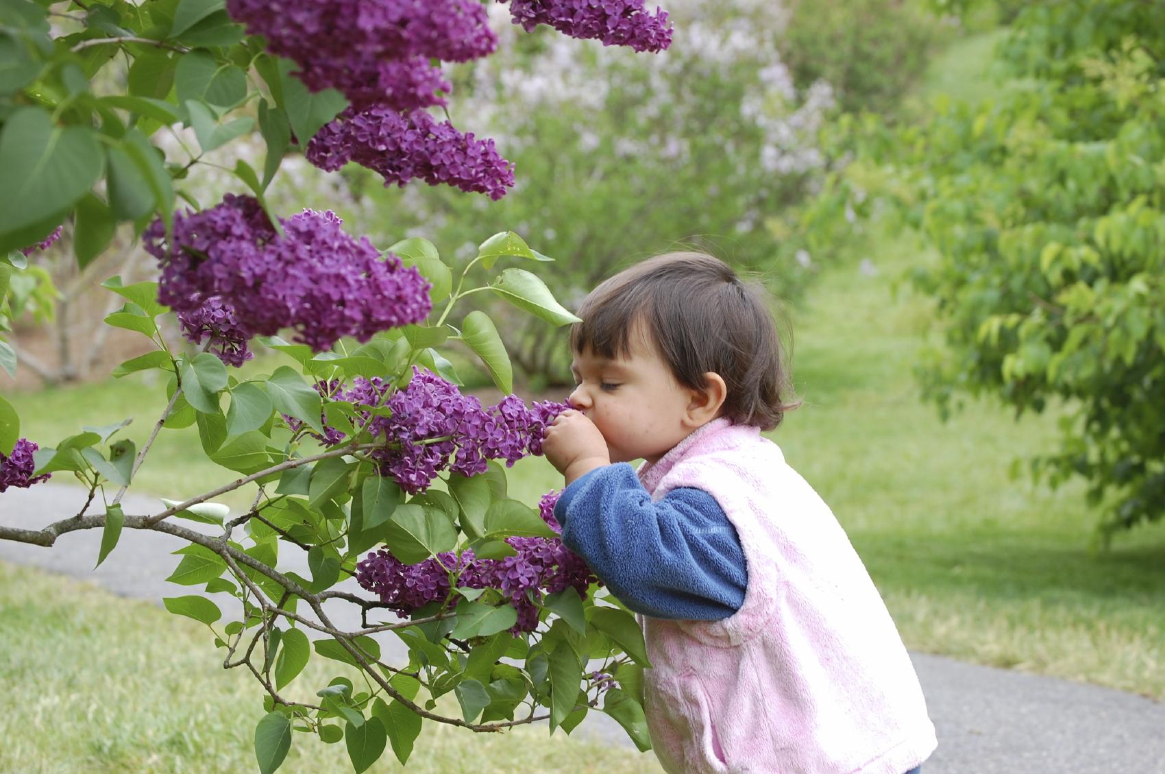 plantas jardim sensorial : plantas jardim sensorial:JARDIM SENSORIAL